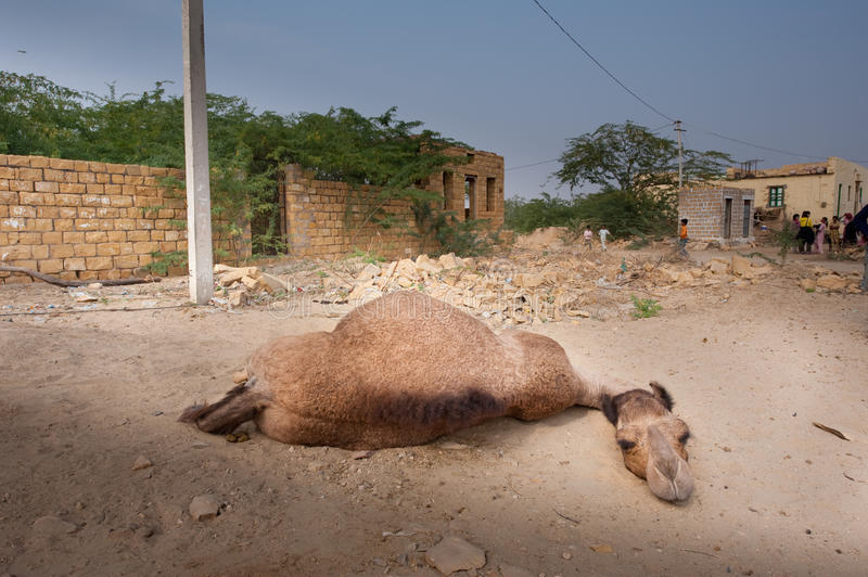 Download The lazy camel editorial photography. Image of tour, rest - 19603572