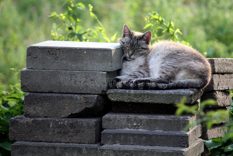 Download Lazy cat stock image. Image of gray, soft, animal, stacking - 14892317