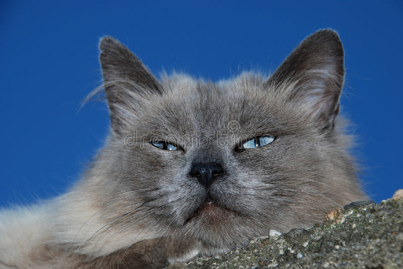 Download Lazy cat stock image. Image of outside, hair, lazy, expression - 5809593