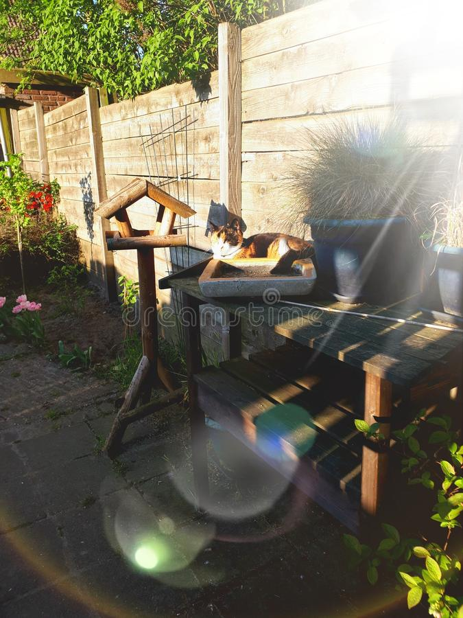 Lazy cat enjoying the last sun rays of the day. Lazy cat, lying on a garden table enjoying the last sun rays of the day royalty free stock photos