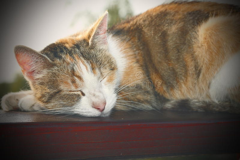 Lazy cat instagram effect. Lazy cat sleeping on wooden balustrade, with instagram effect royalty free stock photo