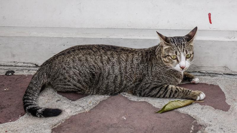 A lazy cat lying on road. A lazy cat relaxing at old house in Bangkok, Thailand royalty free stock images