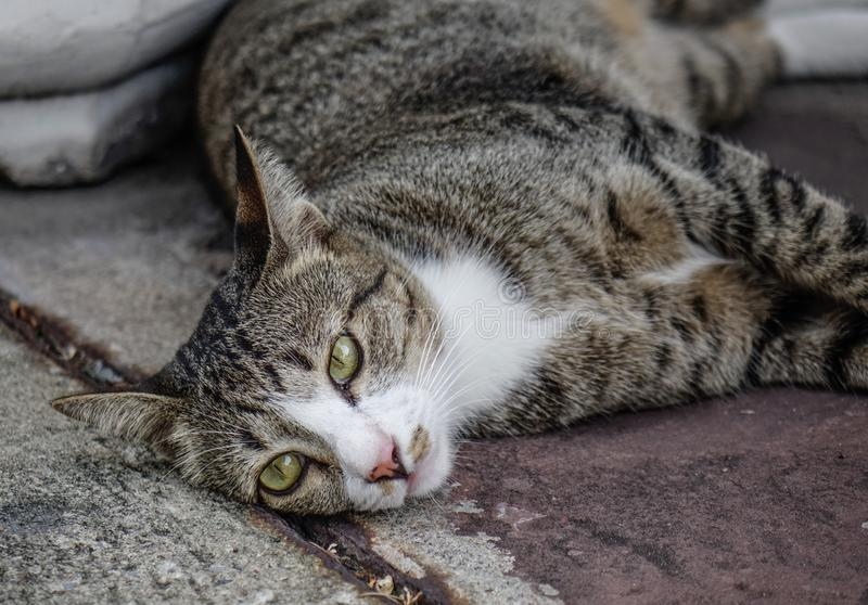 A lazy cat lying on road. A lazy cat relaxing at old house in Bangkok, Thailand stock image