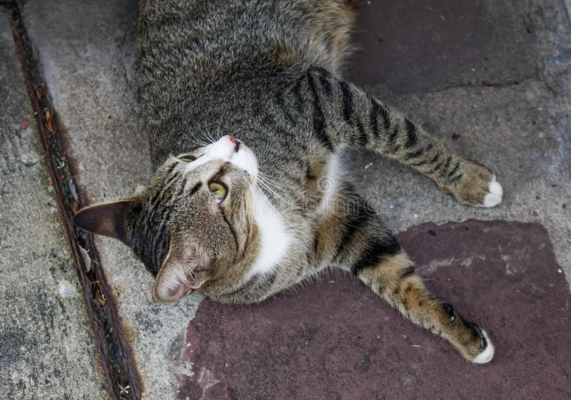 A lazy cat lying on road. A lazy cat relaxing at old house in Bangkok, Thailand royalty free stock photo