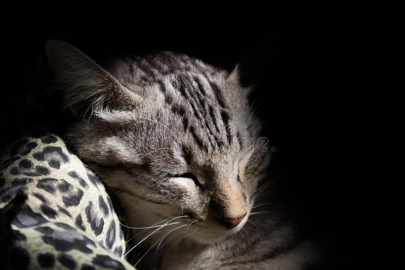Lazy cat sleeping in cat bed with warm sunlight in Monday morning. animal lifestyle concept. royalty free stock images