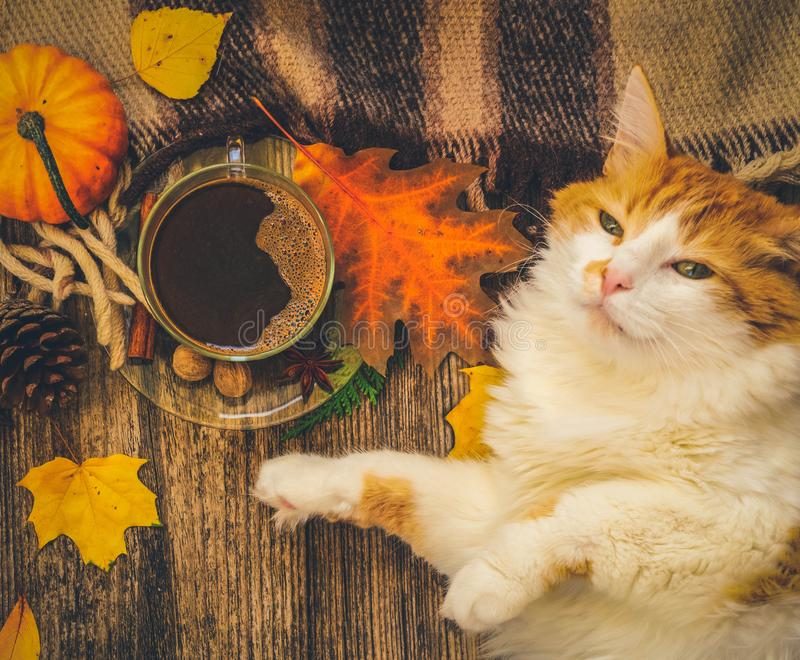 Lazy cat sleeps on fall plaid. Lazy red and white cat sleeps on soft woolen plaid, winter or autumn weekend concept, top view, retro toned stock photos