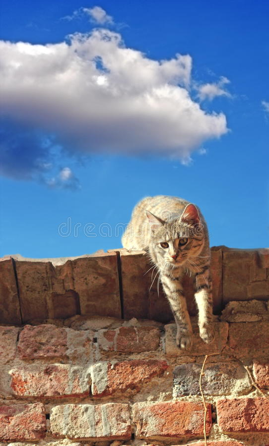 Download Lazy Cat On A Roof Stock Images - Image: 30089974