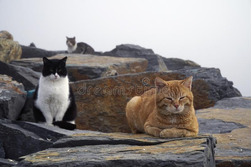 Lazy cats are resting in a foggy day. On the rocks royalty free stock image