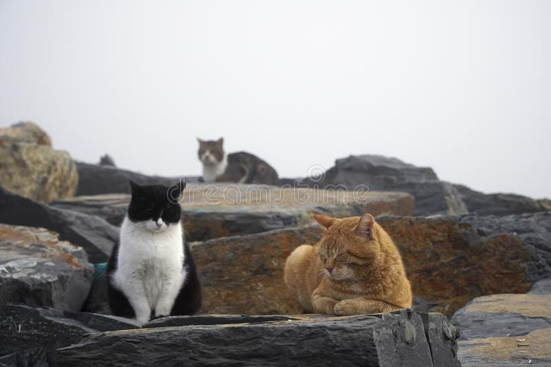 Lazy cats are resting in a foggy day. On the rocks royalty free stock photos