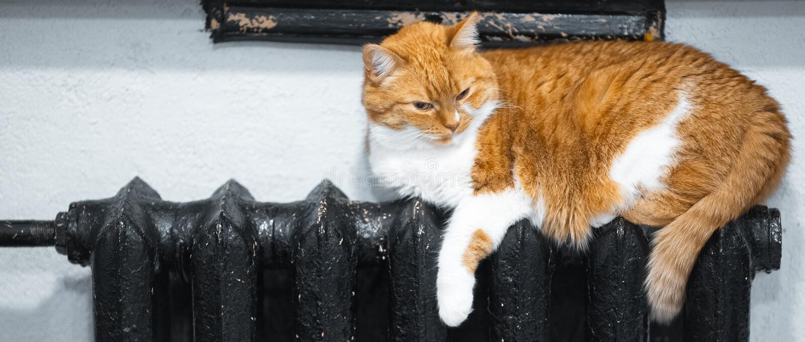 Lazy day of cute red white cat lying on black hot radiator.  royalty free stock photo
