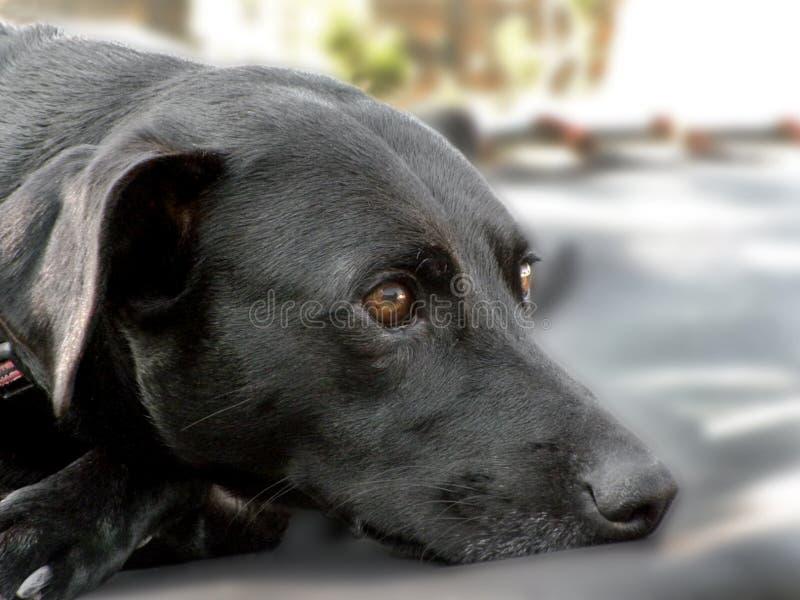 Lazy dog friend stock photo