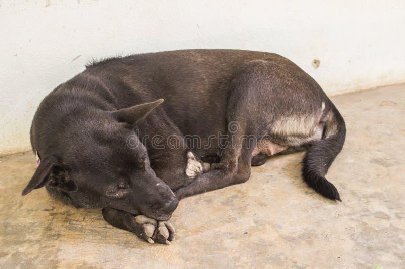 Lazy dog sleeping. At home royalty free illustration