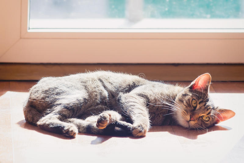 Lazy domestic cat. Warming in the sun by the window stock photos