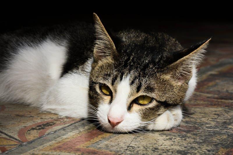 Lazy katt på en fri dag royaltyfri foto