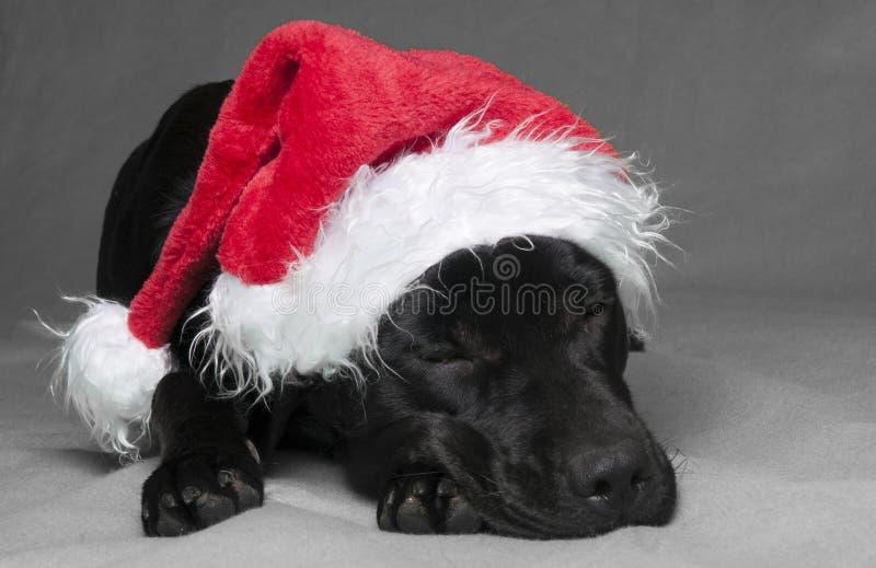 Lazy Labador christmas royalty free stock image