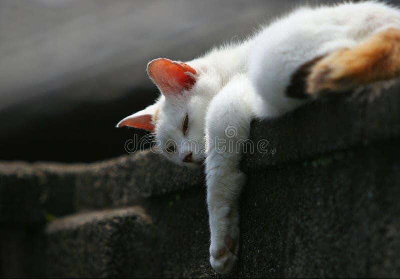 Lazy like Sunday morning stock photography