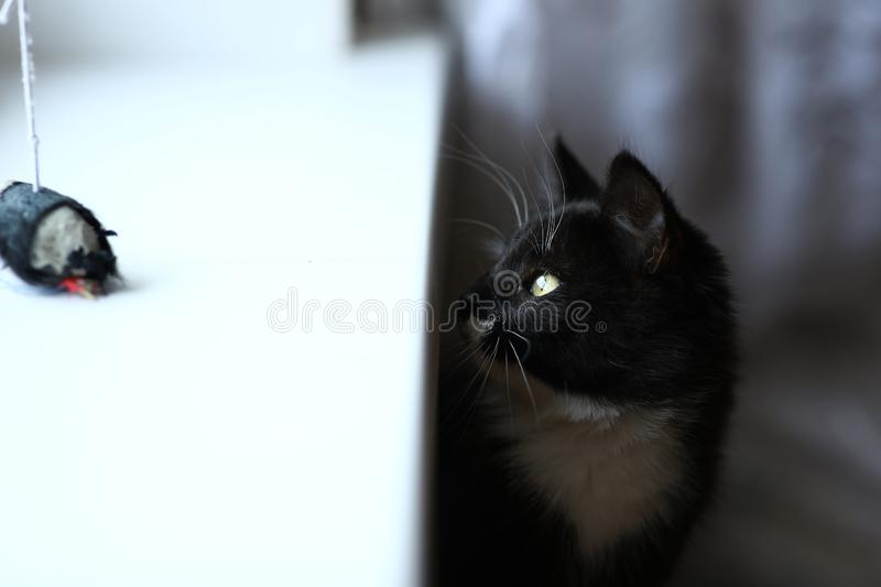 Lazy lovely black cat sitting by the window. Black cute kitten with beautiful eyes relaxing on window sill. Lazy lovely black cat peeking out from under the stock photography