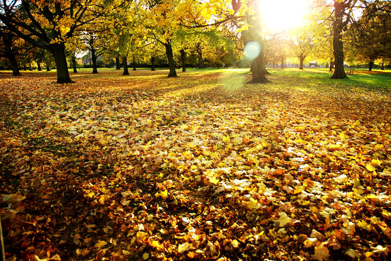 Lazy and sunny day. At hyde park- London stock images