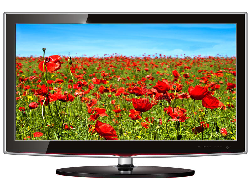 Lcd tv. TV flat screen lcd, plasma with wild flowers on screen royalty free illustration