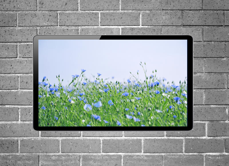 LCD tv with flower meadow on screen hanging on brick wall royalty free stock image