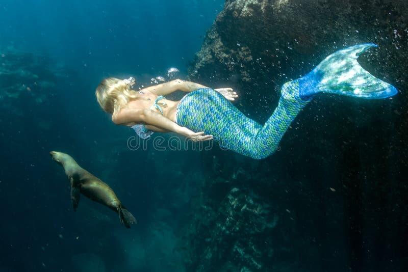 Leão de mar e sereia subaquáticos foto de stock royalty free