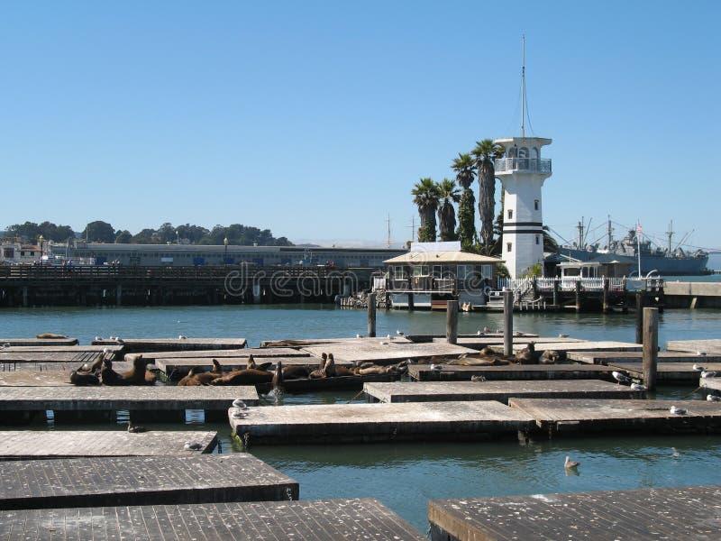 Leão de mar perto do cais 39 e de um farol, San Francisco, Estados Unidos fotos de stock