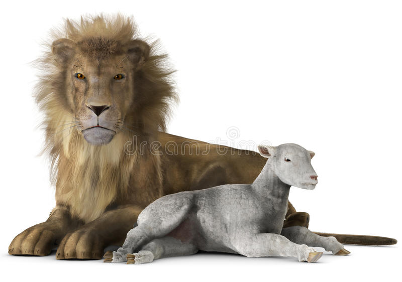 Leão e cordeiro imagem de stock royalty free