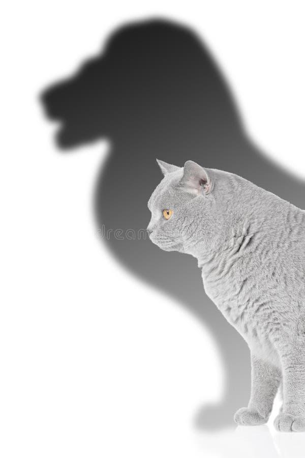 Leão e gato fotografia de stock royalty free