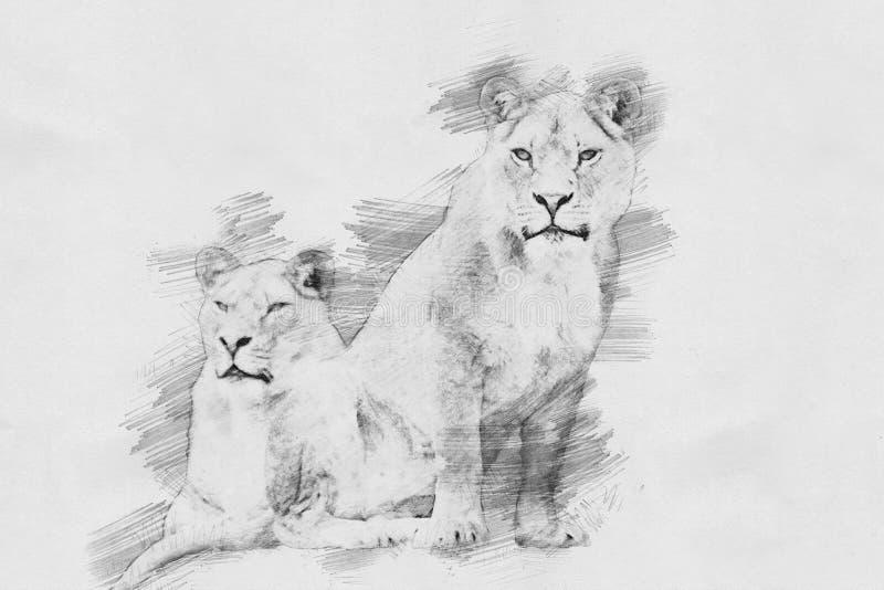 Leão Esboço com lápis ilustração stock