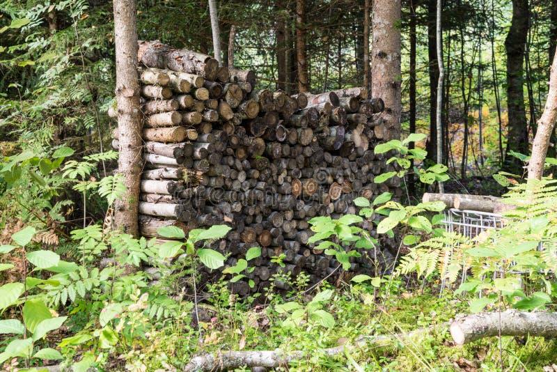Download Leña Apilada De La Picea En El Bosque Foto de archivo - Imagen de pila, campo: 44850636