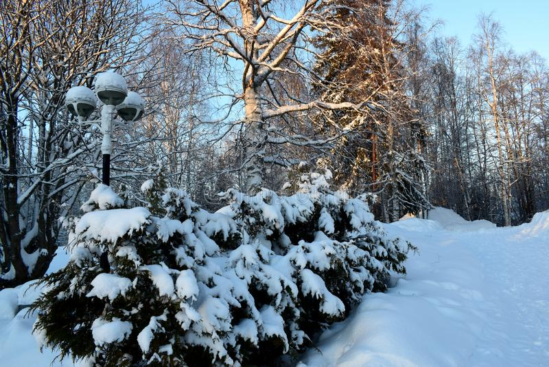 Leña apilada en la nieve imagen de archivo