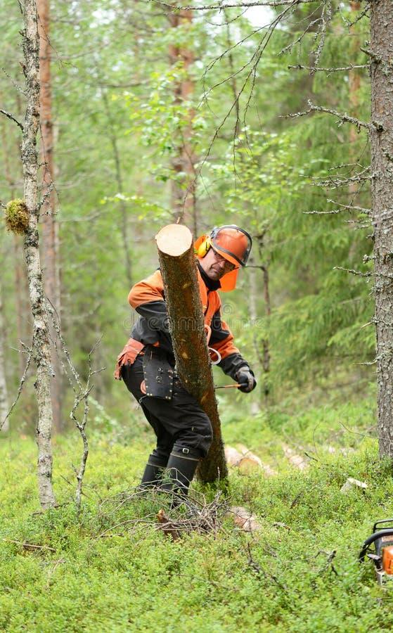 Leñador Worker en bosque imagen de archivo libre de regalías