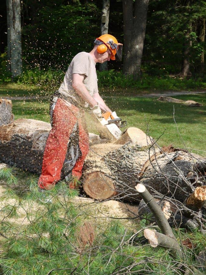 Leñadores: árbol caido chainsawing foto de archivo libre de regalías