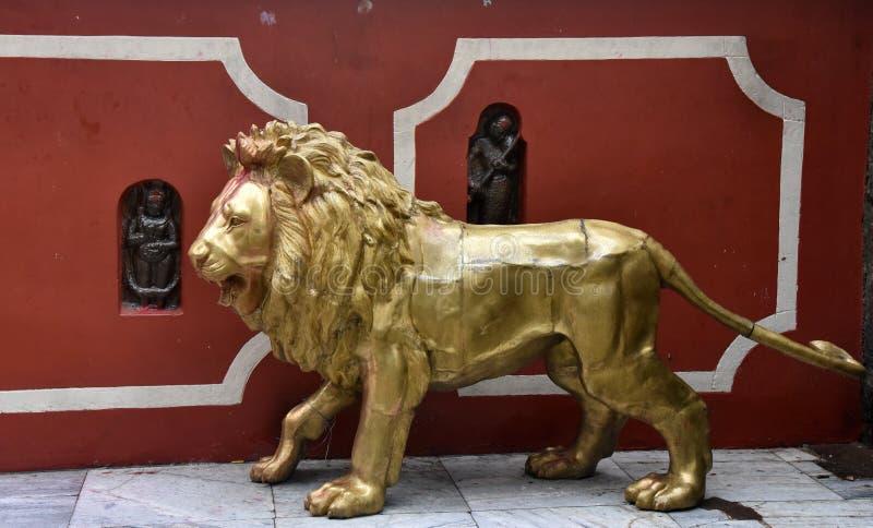León de oro foto de archivo