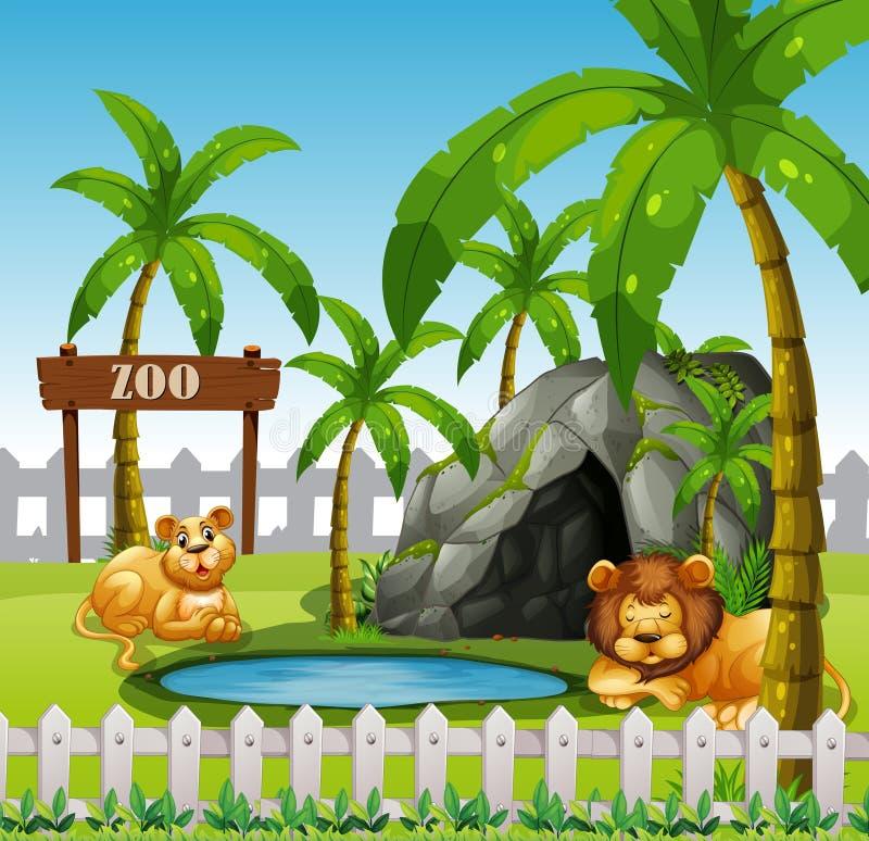 León masculino y femenino en el parque zoológico libre illustration