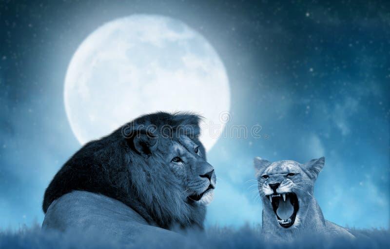 León y leona en la sabana fotografía de archivo