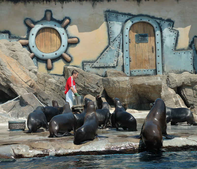 Leões de mar imagem de stock royalty free