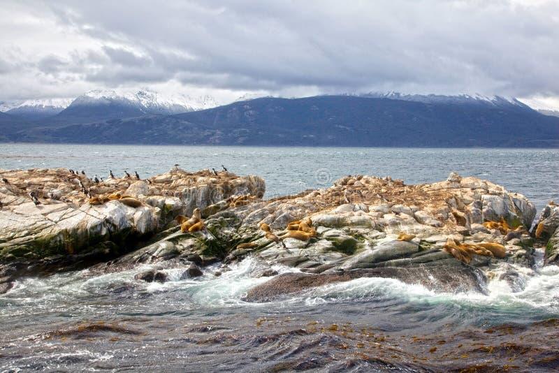 Leões de mar & cormorões do sul, Tierra Del Fuego, Ushuaia, Argentina imagens de stock