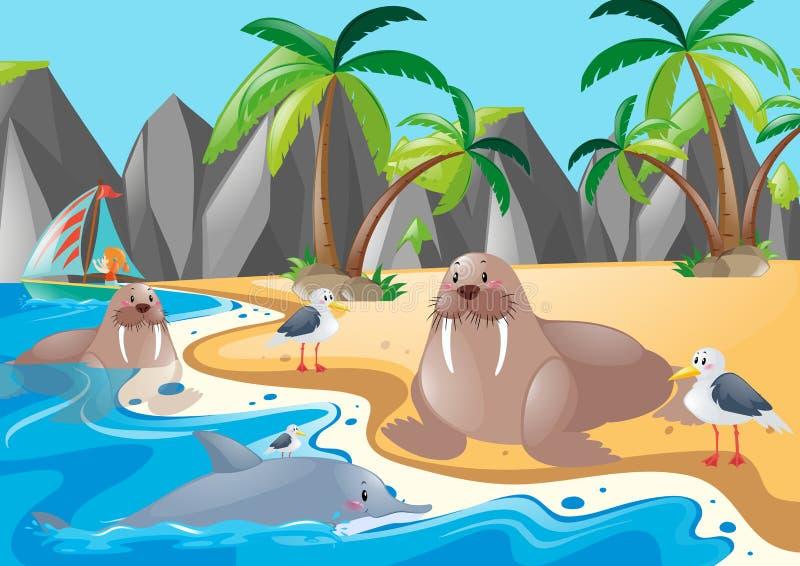 Leões de mar e gaivotas na costa ilustração do vetor