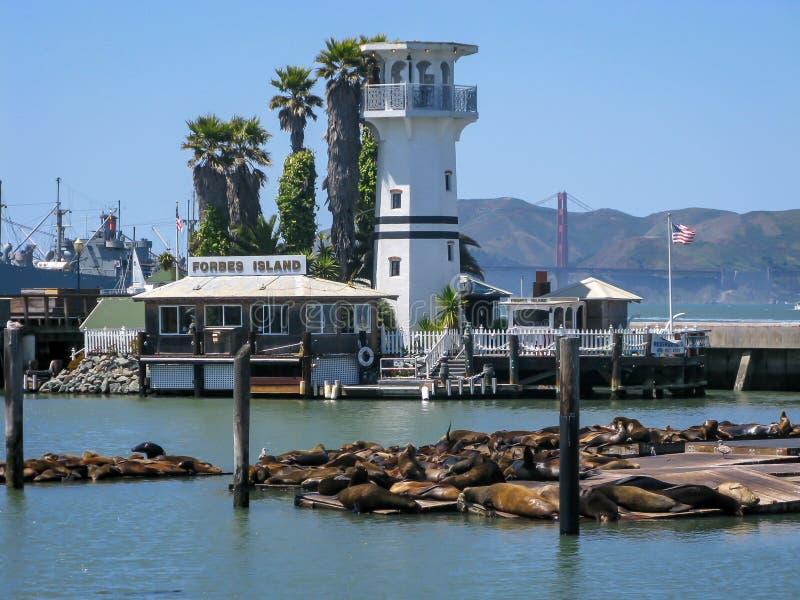 Leões de mar, o cais do pescador, San Francisco foto de stock