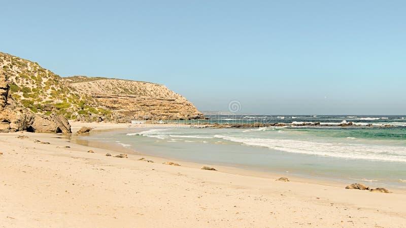 Leões de mar, parque da conservação da baía do selo, ilha do canguru, SA, Aust imagens de stock royalty free