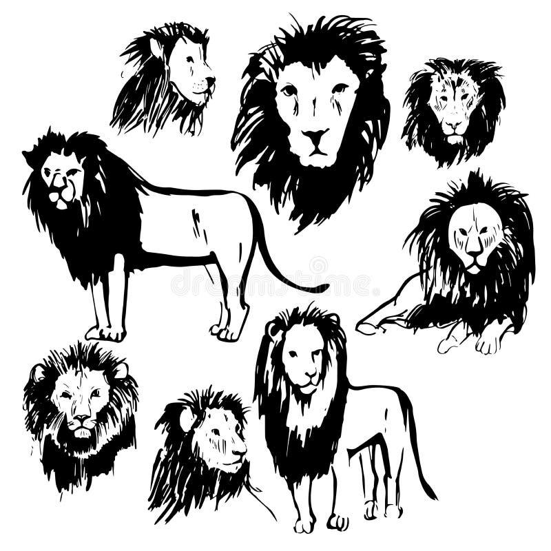 Leões tirados mão Ilustração do esboço do vetor ilustração do vetor