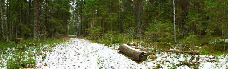 leśna ścieżki panoramiczna zimy. obraz stock