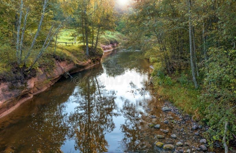 Leśna Amata rzeka, Latvia obraz royalty free