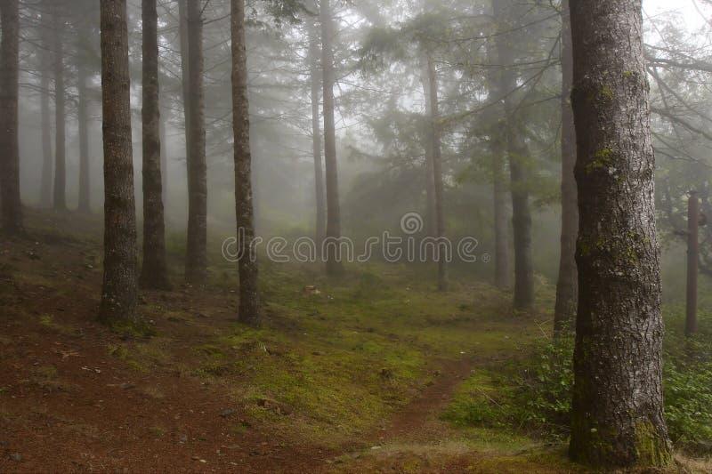 leśna mgła. zdjęcia stock