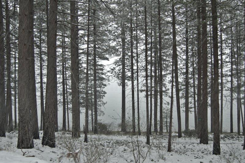 leśna zimy śniegu obrazy royalty free