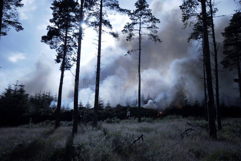 leśny dziki ogień obraz stock