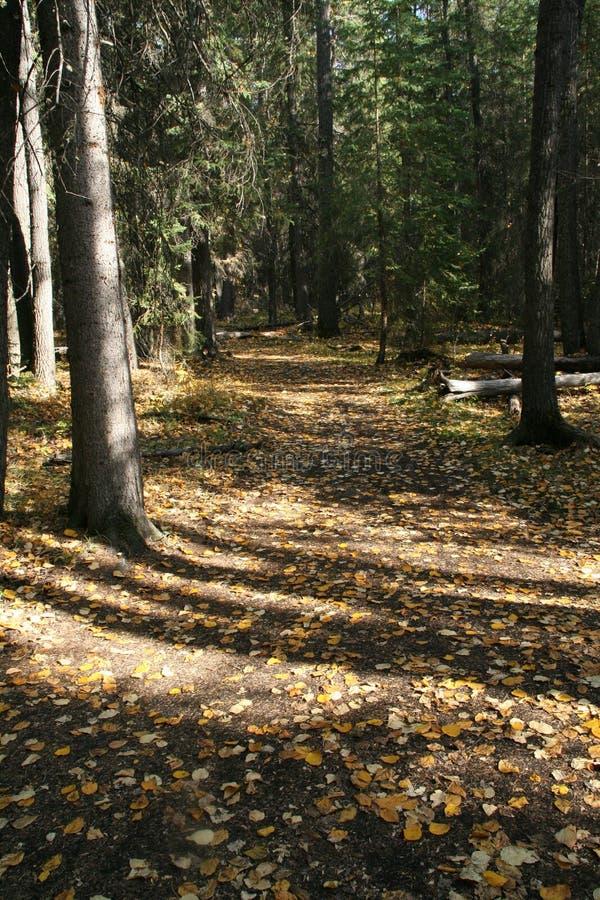 leśny jesieni toru zdjęcia royalty free