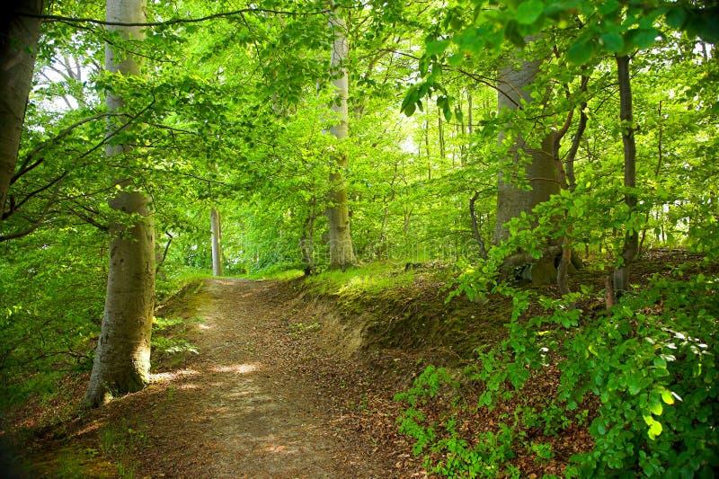 leśny lato obraz royalty free