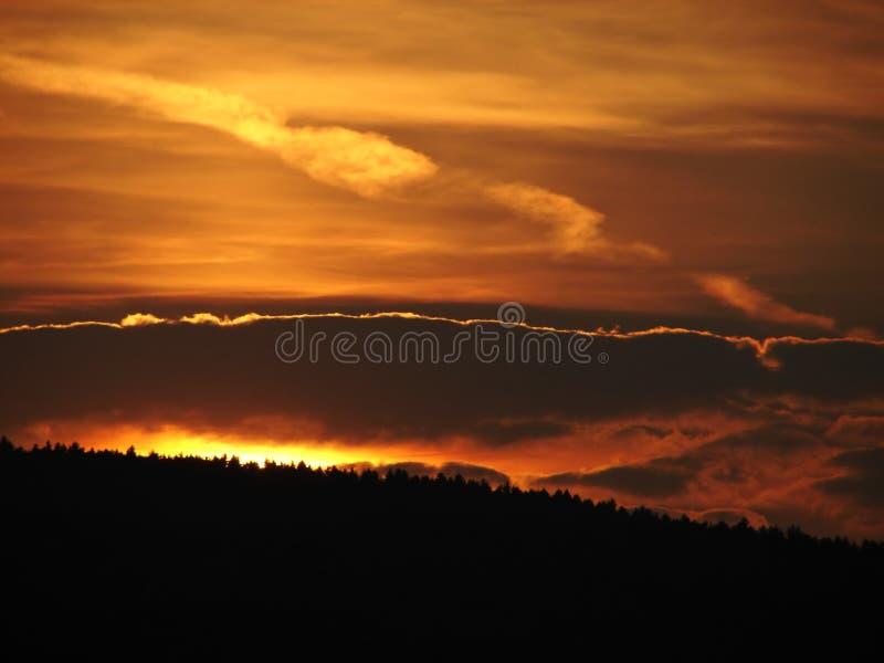 leśny ogień słońca obrazy stock